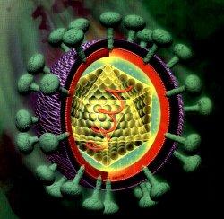 Actualización en el Virus de la Hepatitis C
